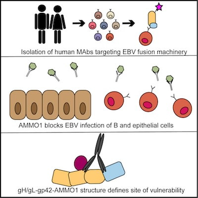Double trouble: epithelial and B cell neutralization of