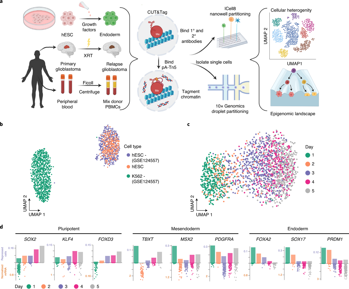 Single-cell CUT&Tag to identify cell states in normal and disease tissue
