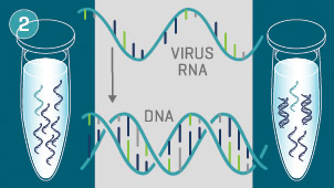 Graphic: DNA and RNA illustration