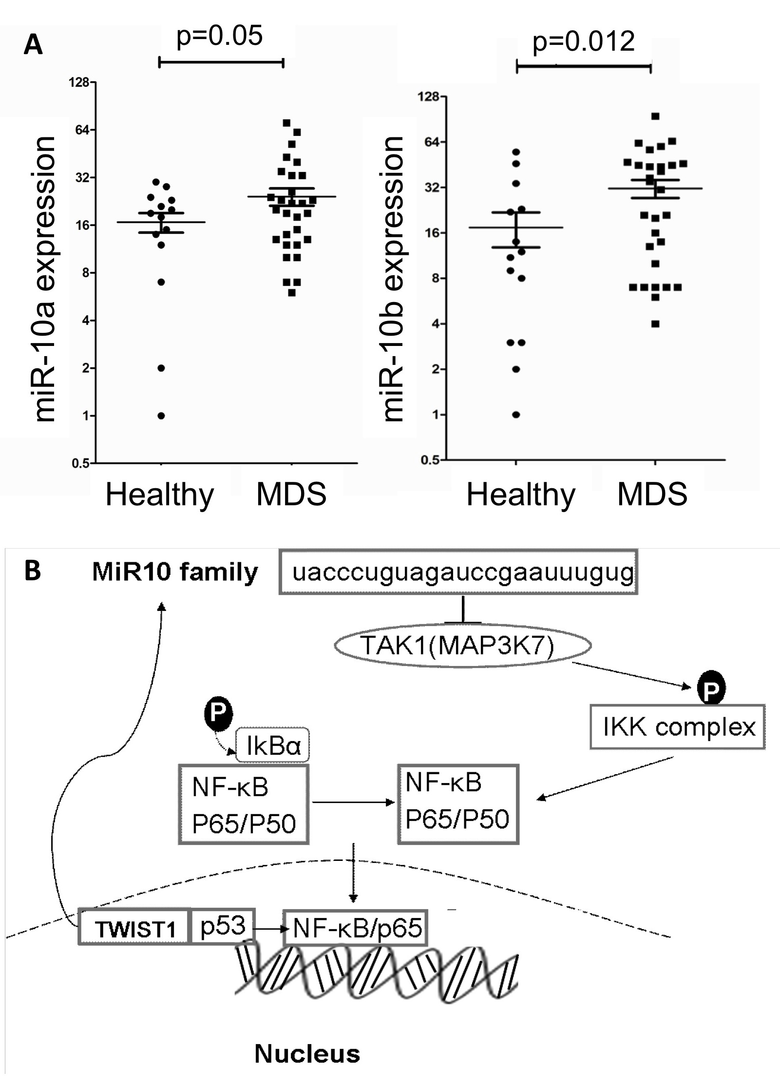 Transcription factor TWIST-1 induces miR-10a/b expression in MDS clonal cells.