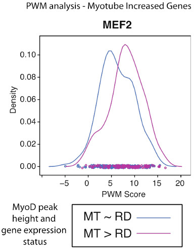 Graph of MyoD binding v gene expression