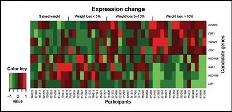 Differential gene expression analyzed by weight change