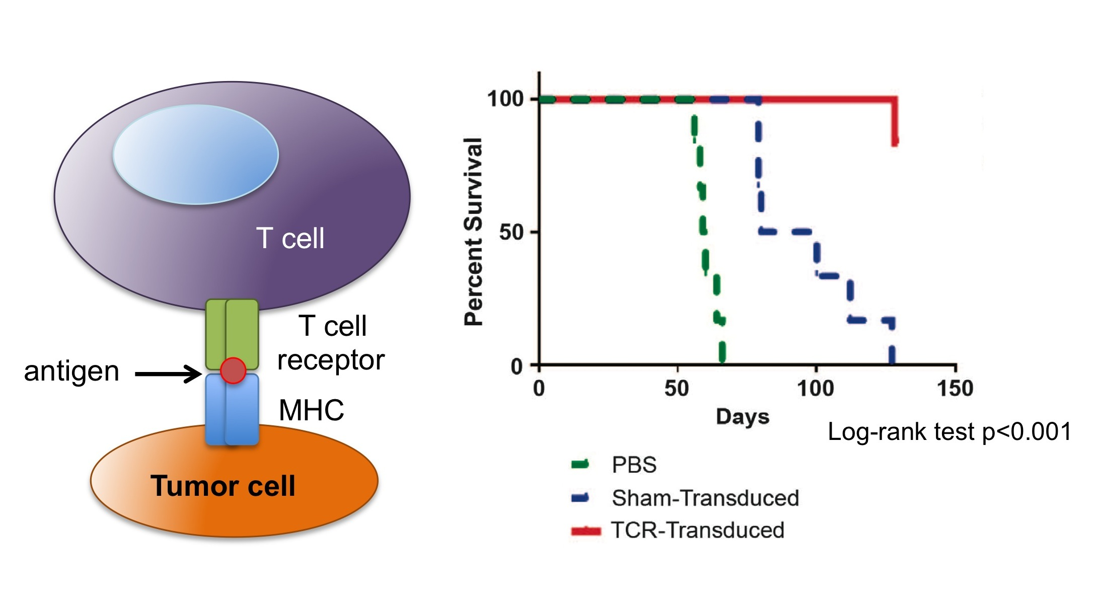 Evasion Of Adoptive T Cell Therapy Through Loss Of Mhc