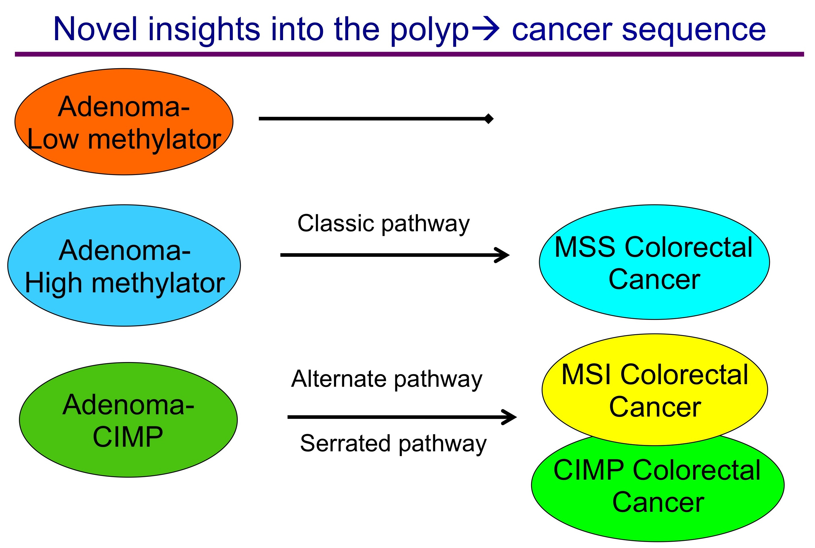 Novel Insights Into The Colon Polyp To Cancer Sequence