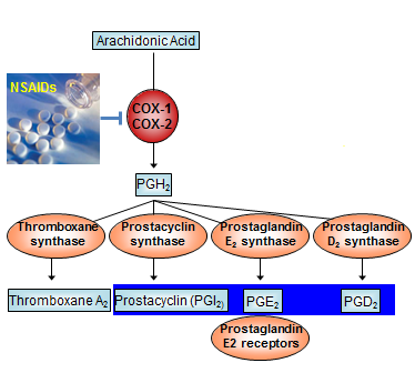 prostaglandin synthesis pathway