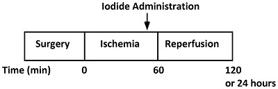 timeline of iodide administration