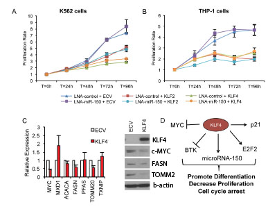 Proliferation rate, microarray, and western blots demonstrate KLF4 increases differentiation and decrases proliferation in AML cells