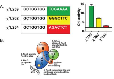Genetic Recombination